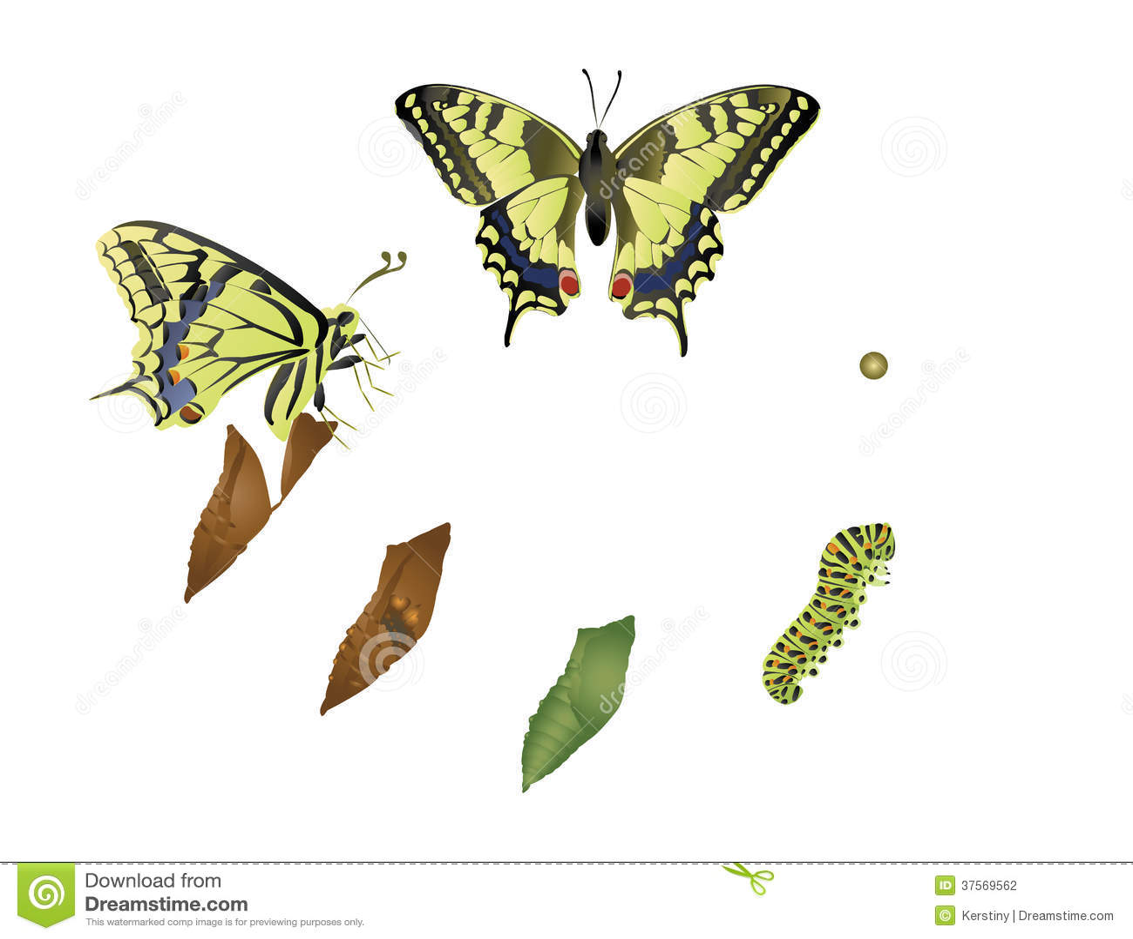 Cycle de vie de papillon illustration stock illustration du insectes 37569562 - Duree de vie papillon de nuit ...