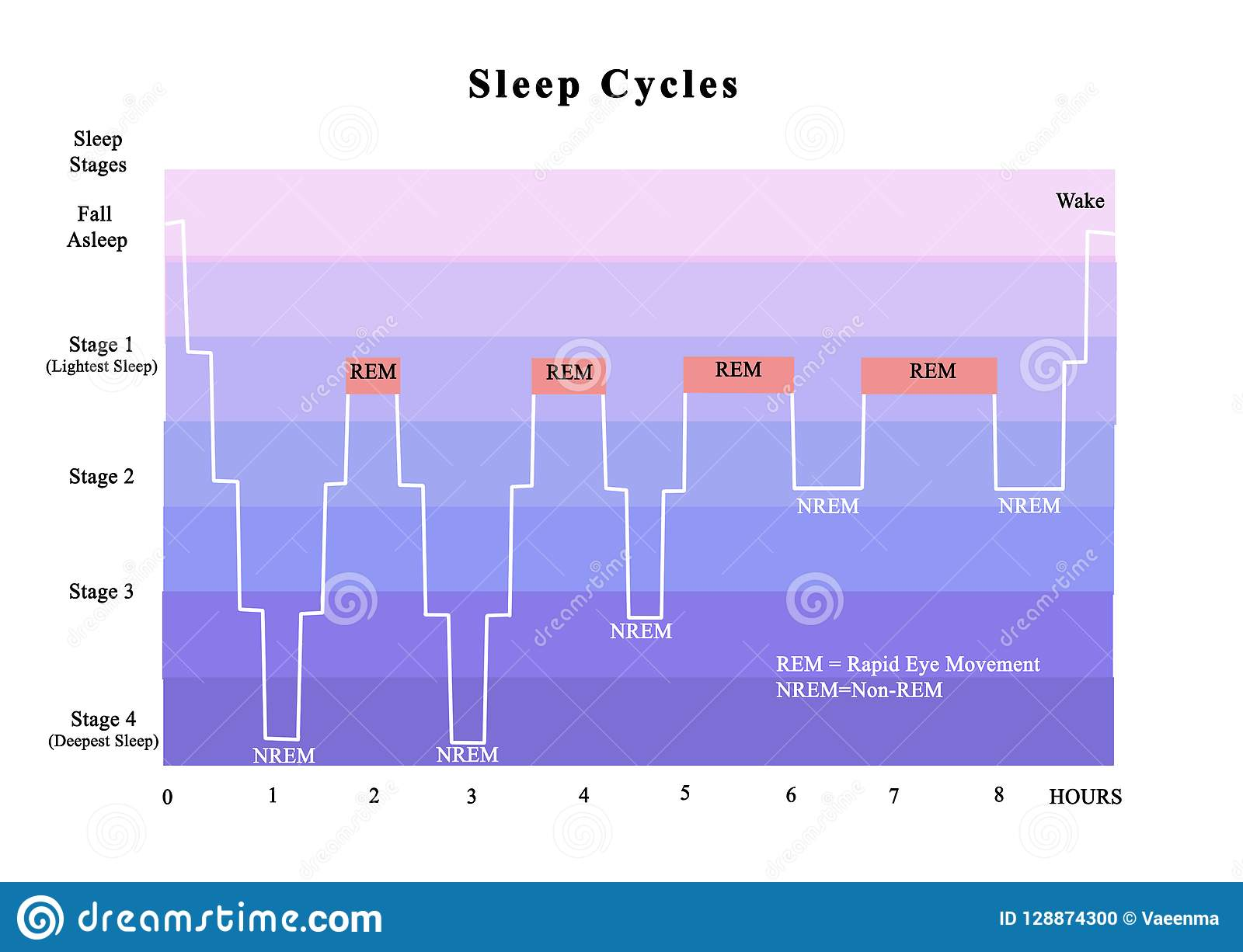 cycles of rem and nrem sleep