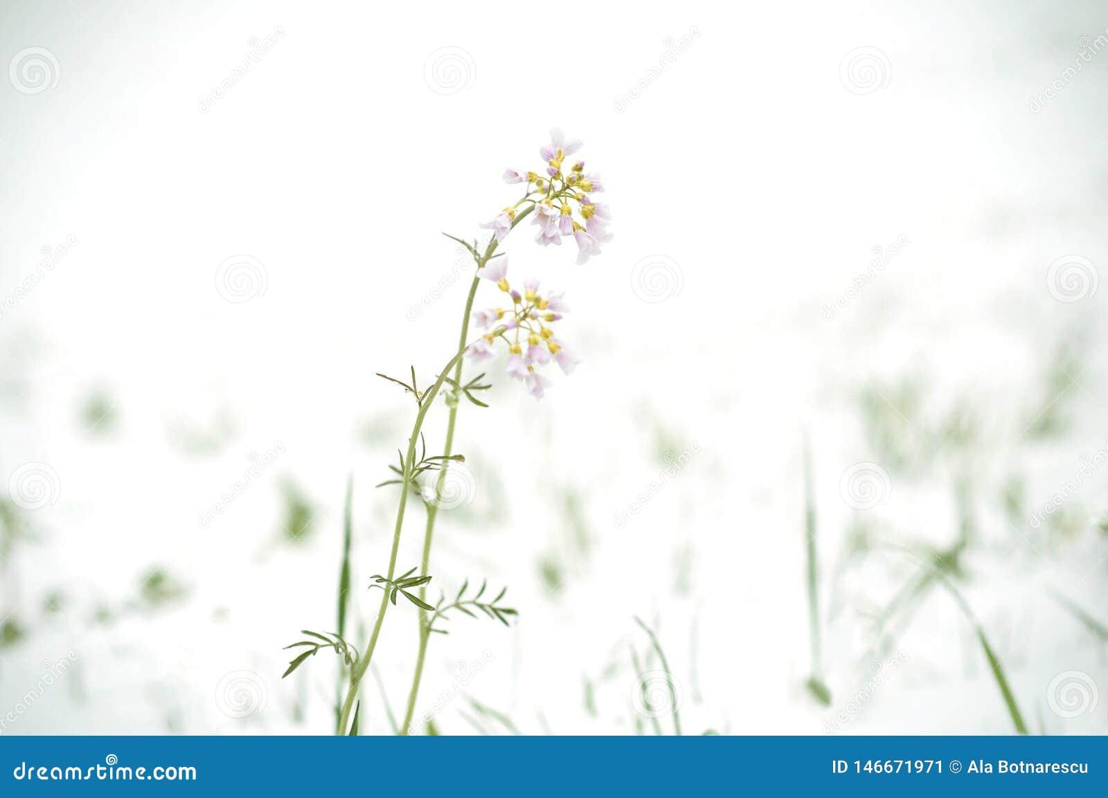 Cyclone de neige en avril Neige au-dessus des fleurs de floraison de champ