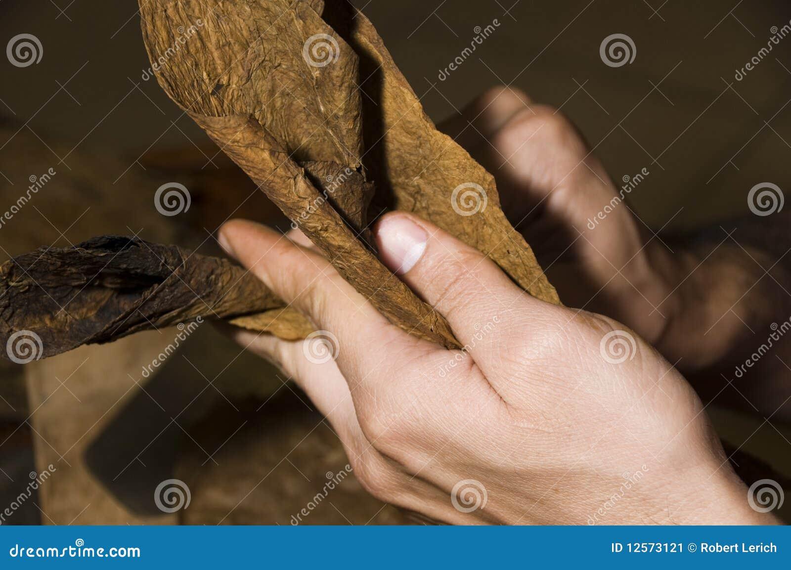 Cygarowi świezi liść staczający się tytoń