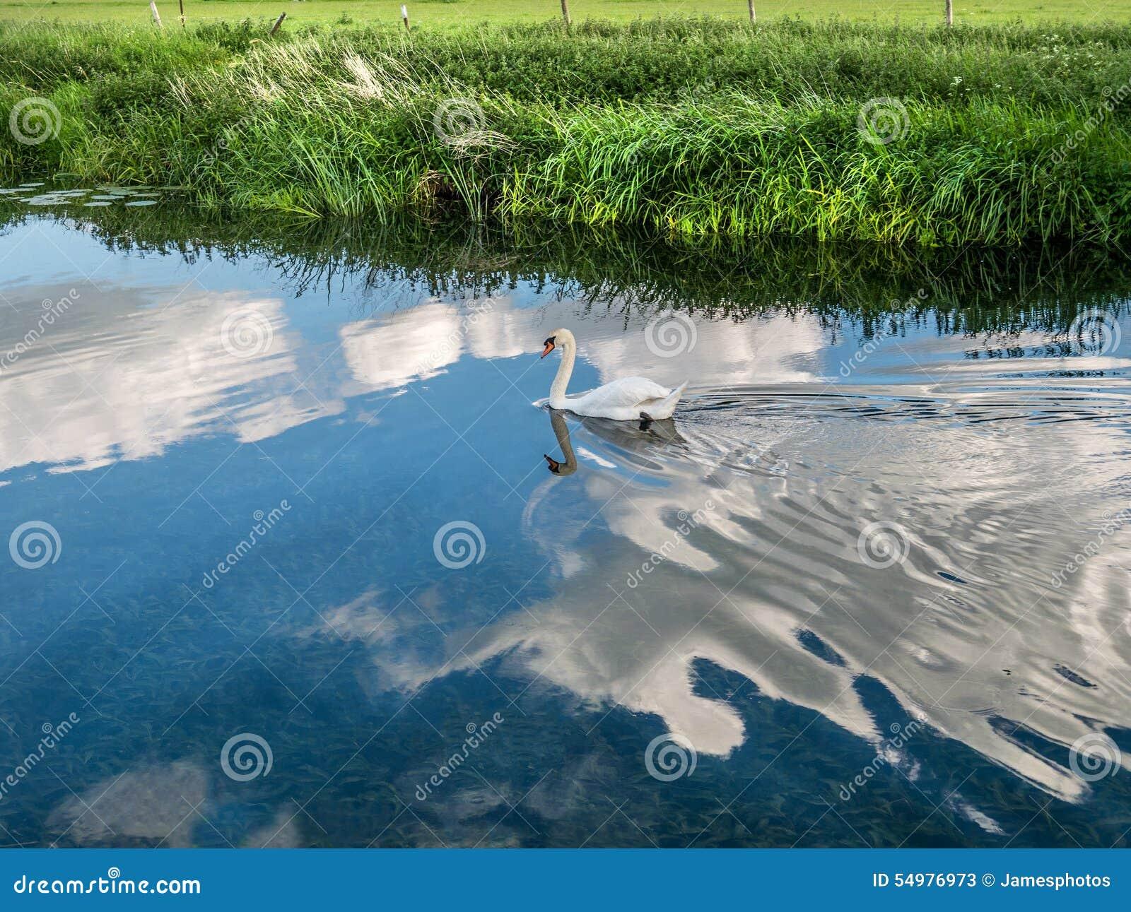 Cygne blanc flottant sur le nuage 9