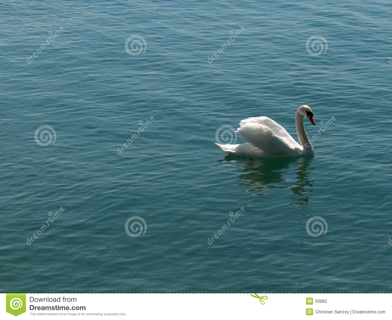 Download Cygnus - cygne photo stock. Image du oiseau, laque, cygne - 50882
