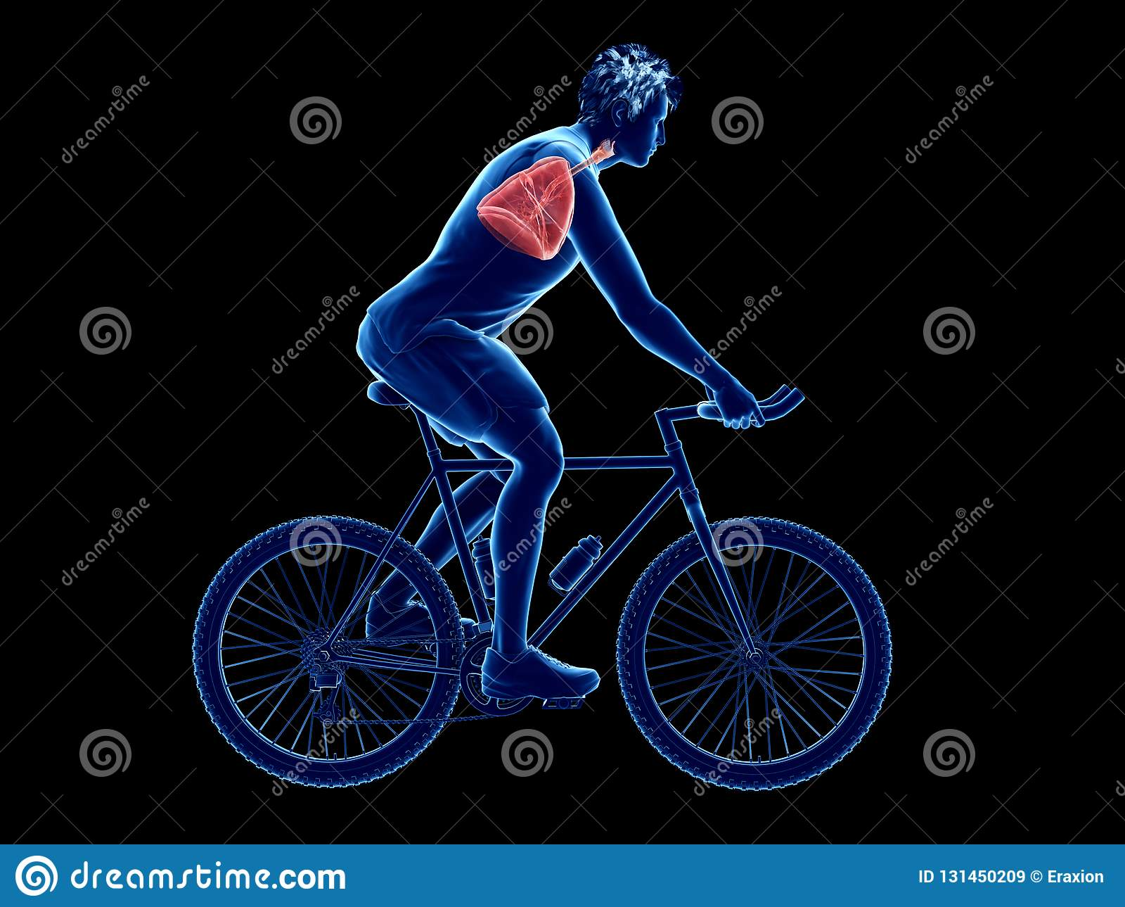 Cyklisty płuco