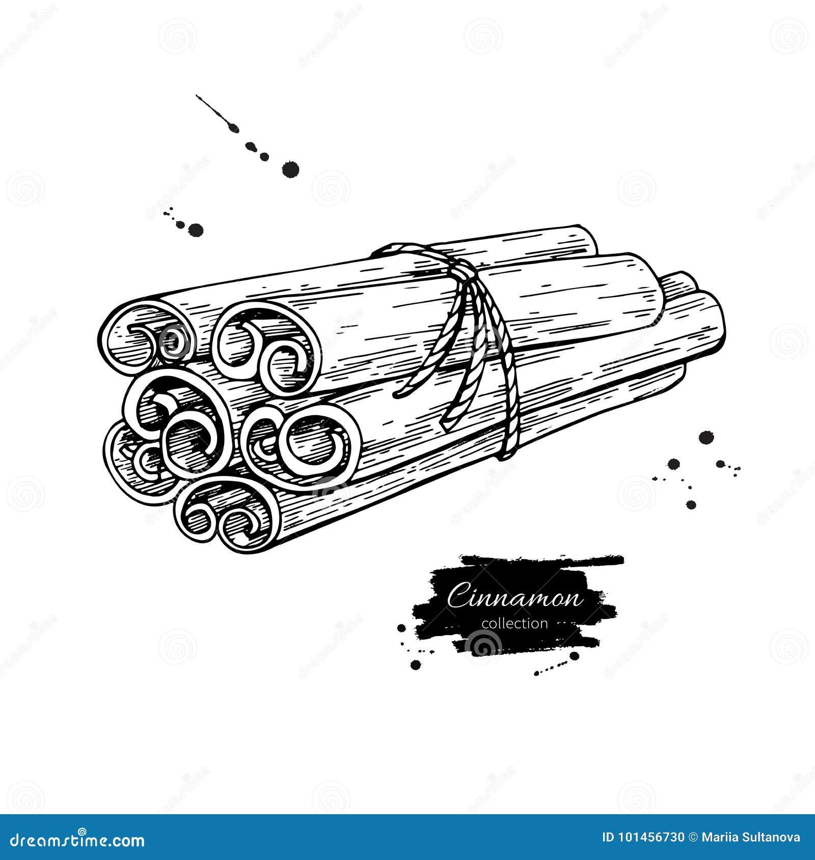 Cynamonowego kija wiązki wektoru wiązany rysunek Ręka rysujący nakreślenie Morze