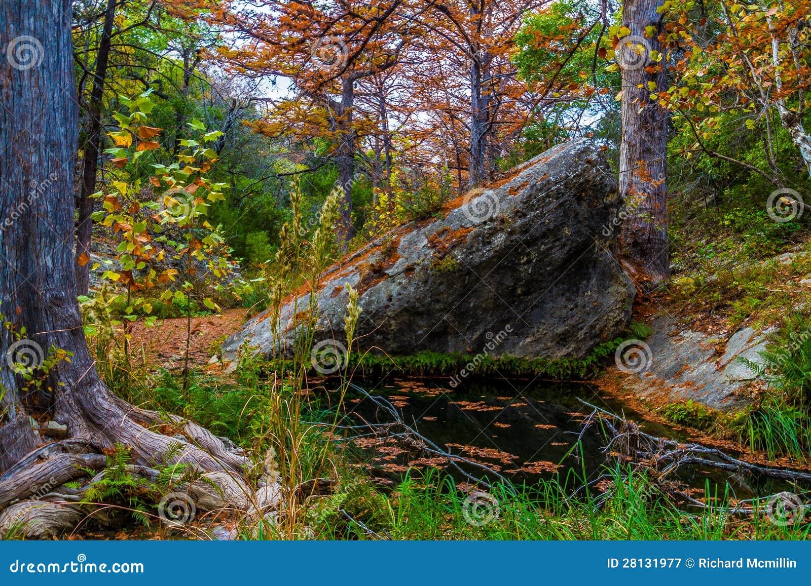 Cypern Trees på Hamilton liten vik