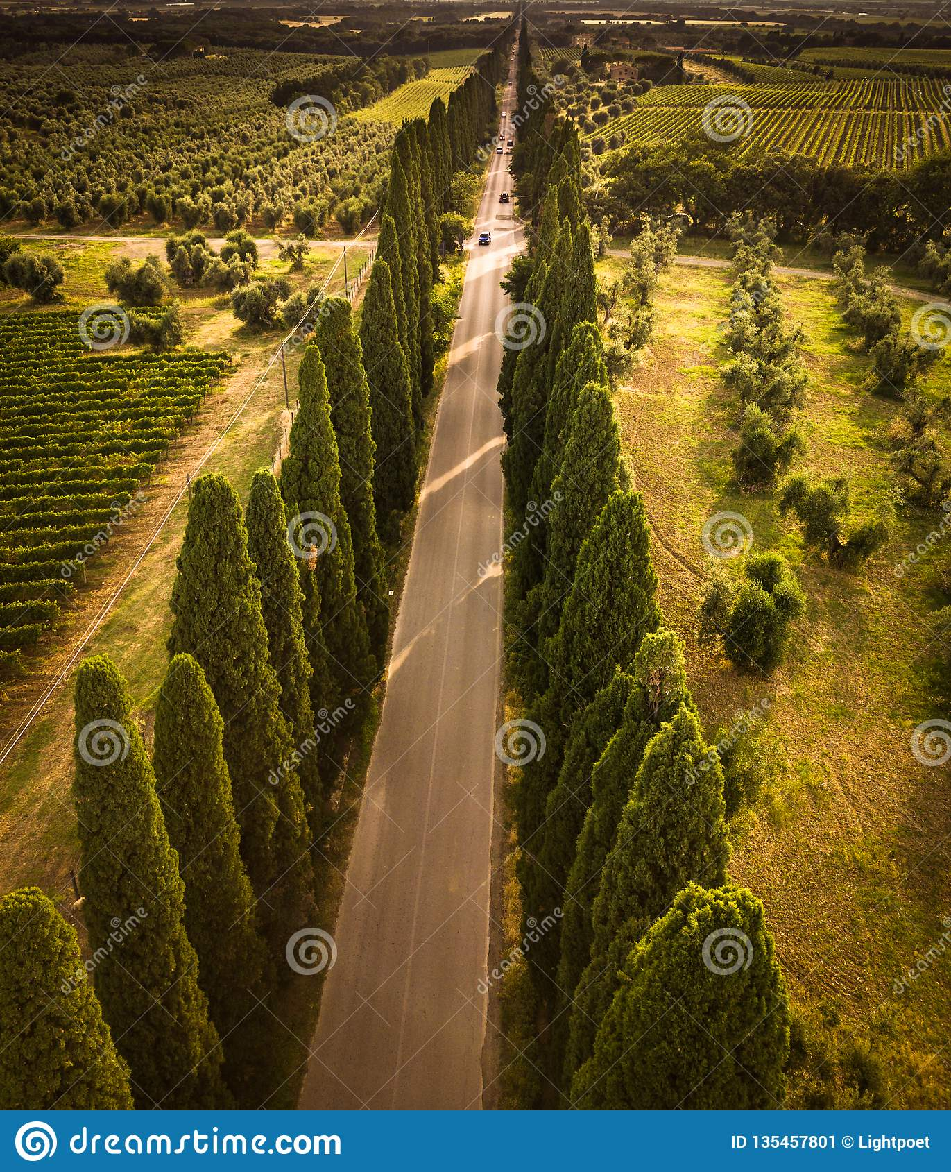 Cypress alley with rural country road, Tuscany