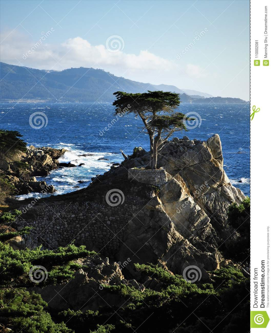 Cypress solitario en Pebble Beach en California