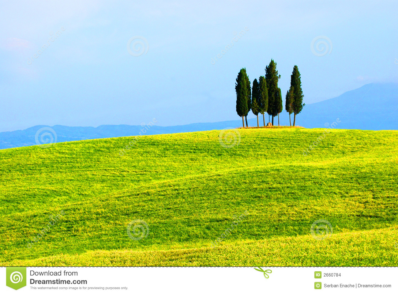 Cypress trees and green fields