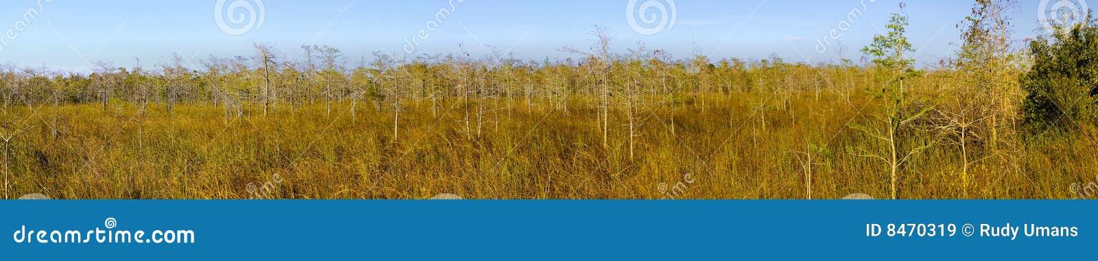 Cypresseverglades landscape panorama