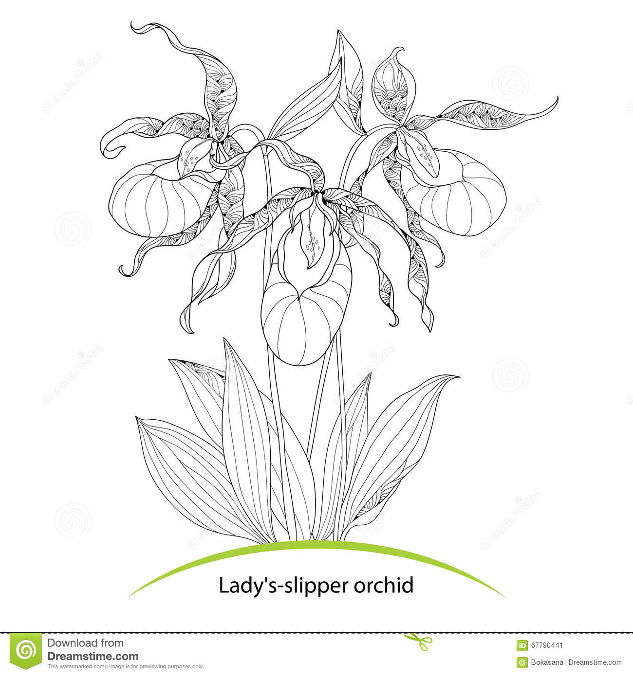 Cypripedium Calceolus Or Ladys Slipper Orchid Isolated On