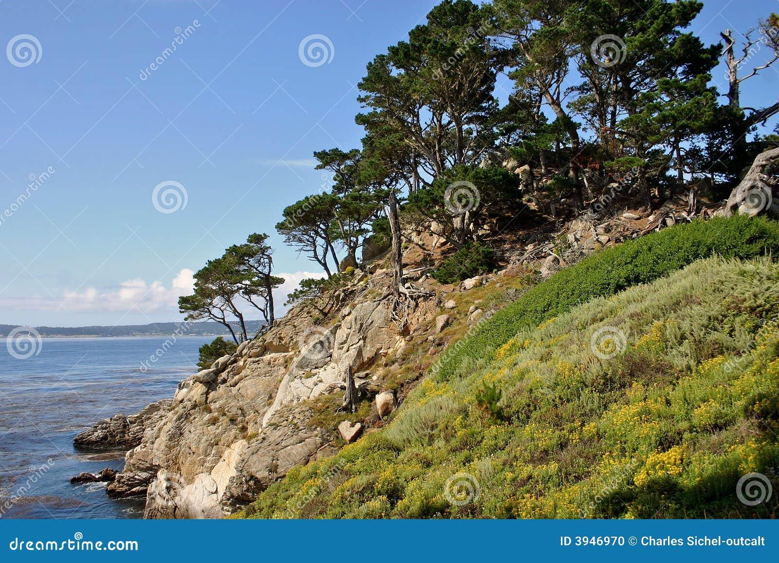 Cyprysowi carmel klifów oceanu drzewa