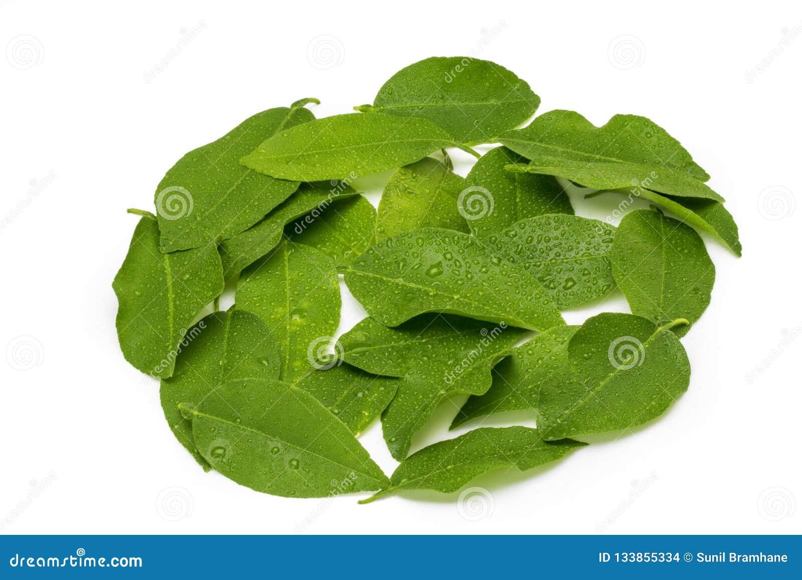 Cytryna liście odizolowywający na białym tle