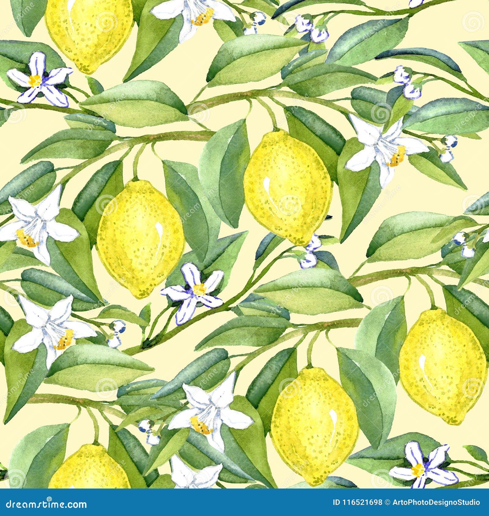 Cytryna rozgałęzia się z owoc i białymi kwiatami na miękkim żółtym tle