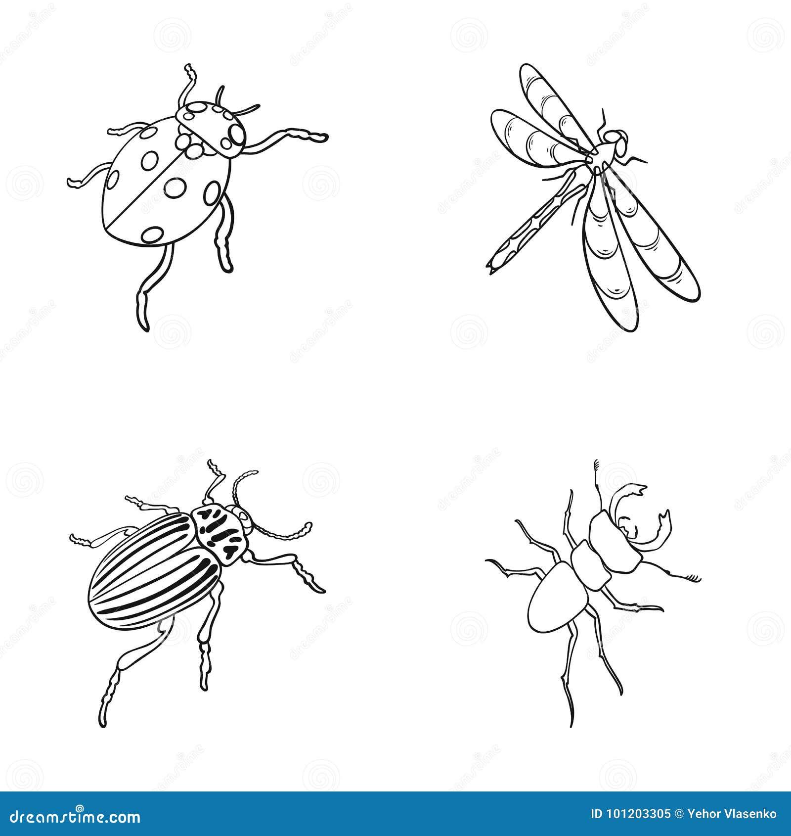 Członkonoga insekta ladybird, dragonfly, ściga, Kolorado ścigi insekt ustawiać inkasowe ikony w konturze projektuje wektor
