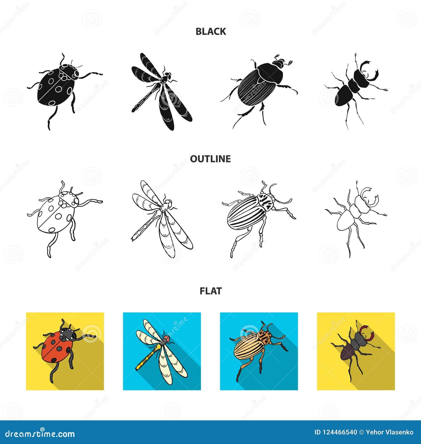 Członkonoga insekta ladybird, dragonfly, ściga, Kolorado ścigi insekt ustawiać inkasowe ikony w kreskówce projektuje wektor
