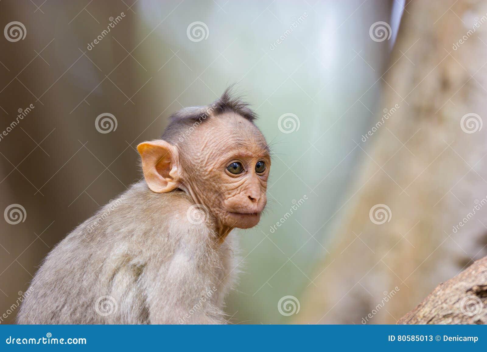 Czapeczka makak
