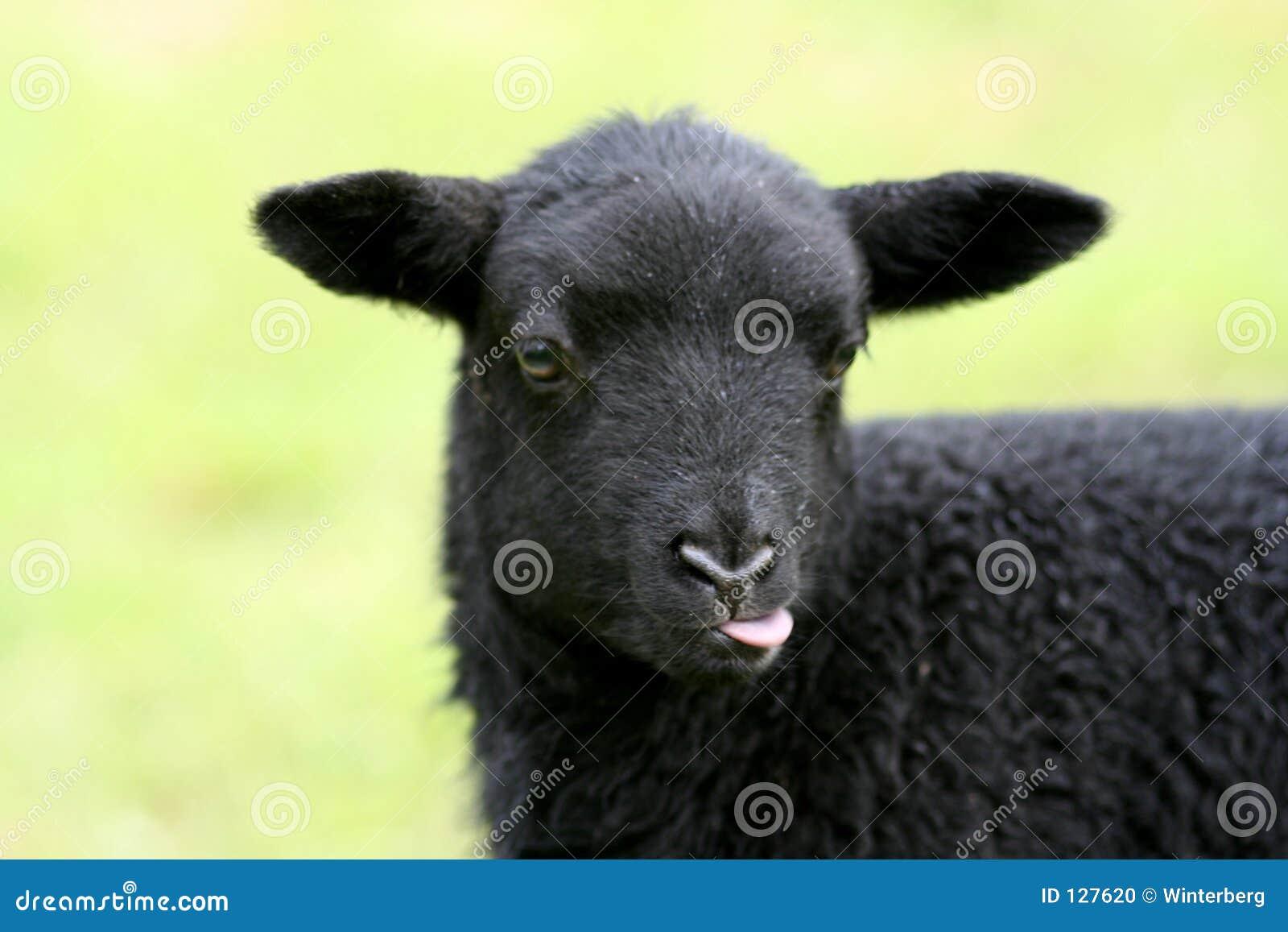 Czarna owca dziecka
