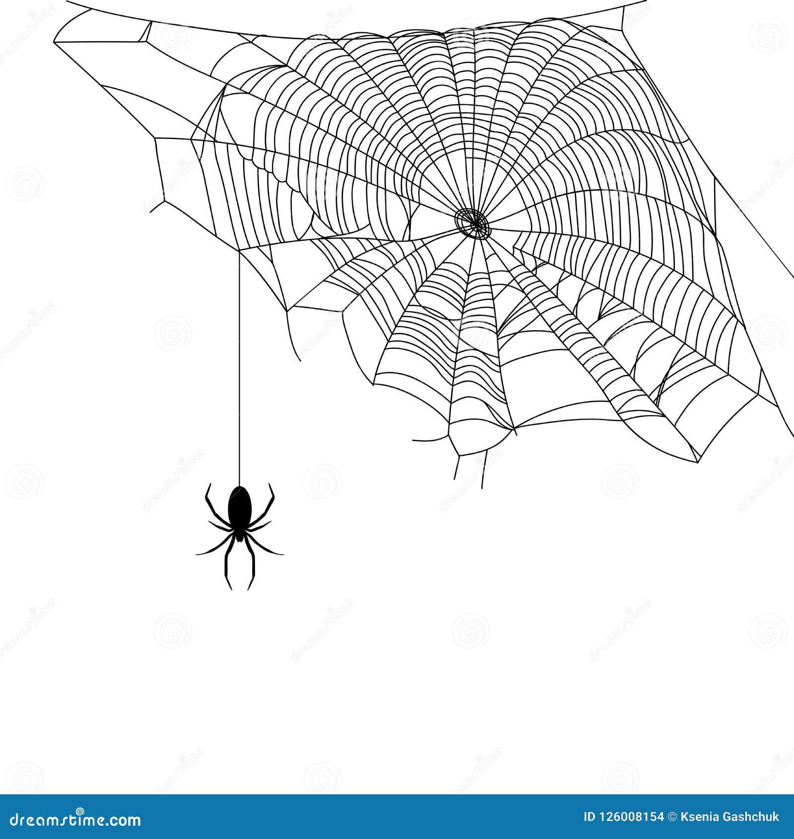 Czarna sieć i pająk