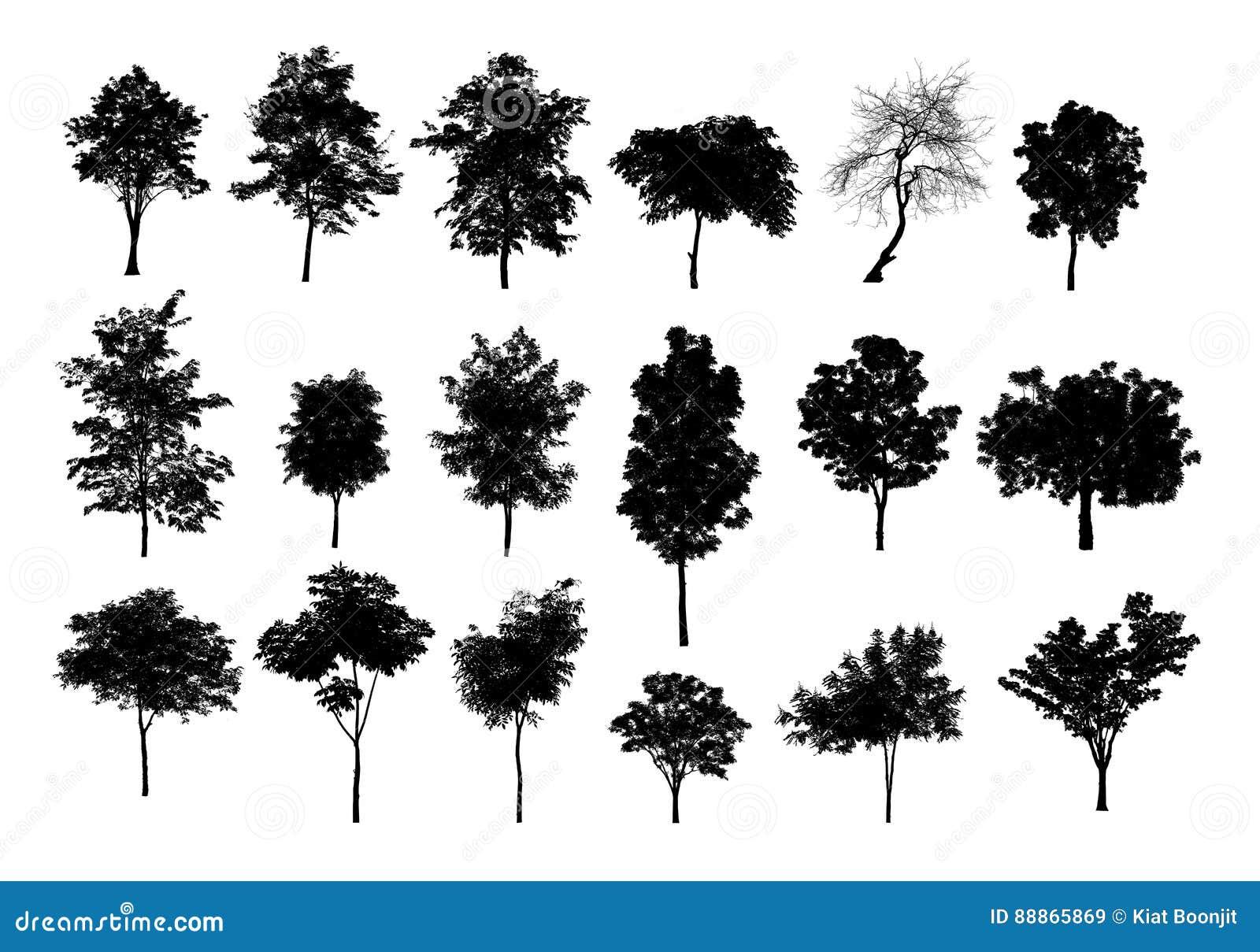 Czarne drzewne sylwetki na białym tle, sylwetka drzewa