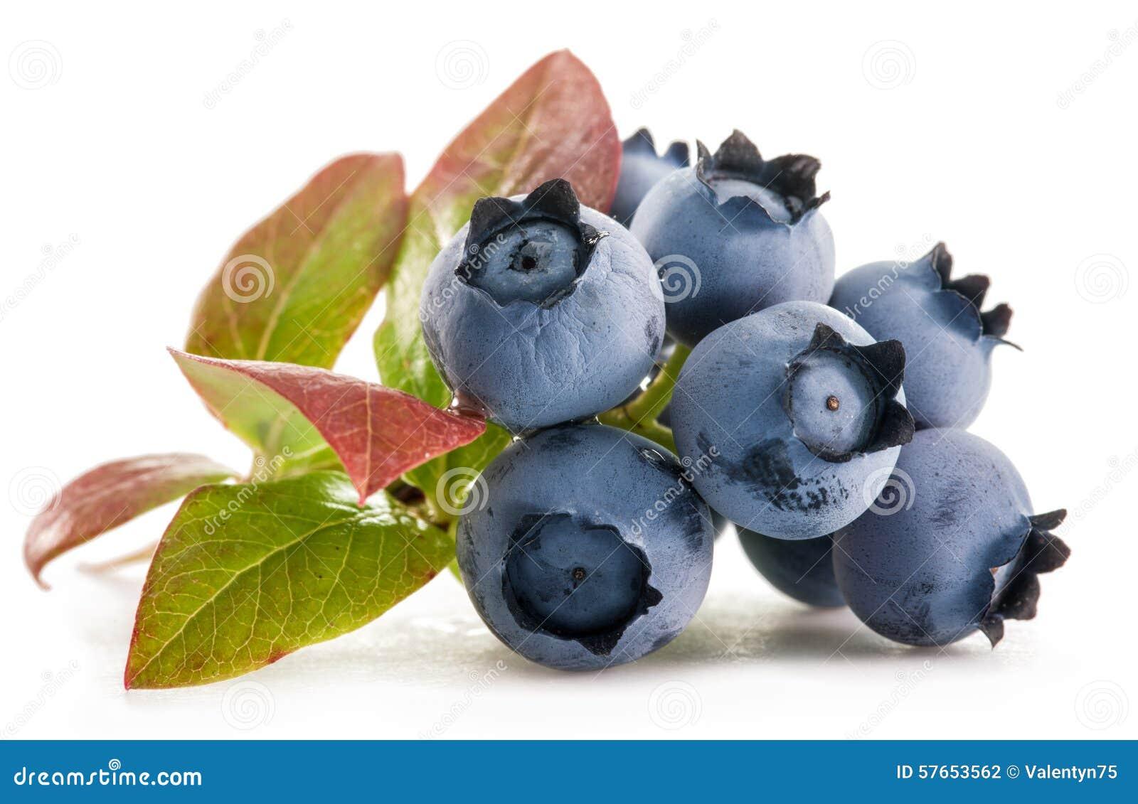 Czarne jagody dojrzałe