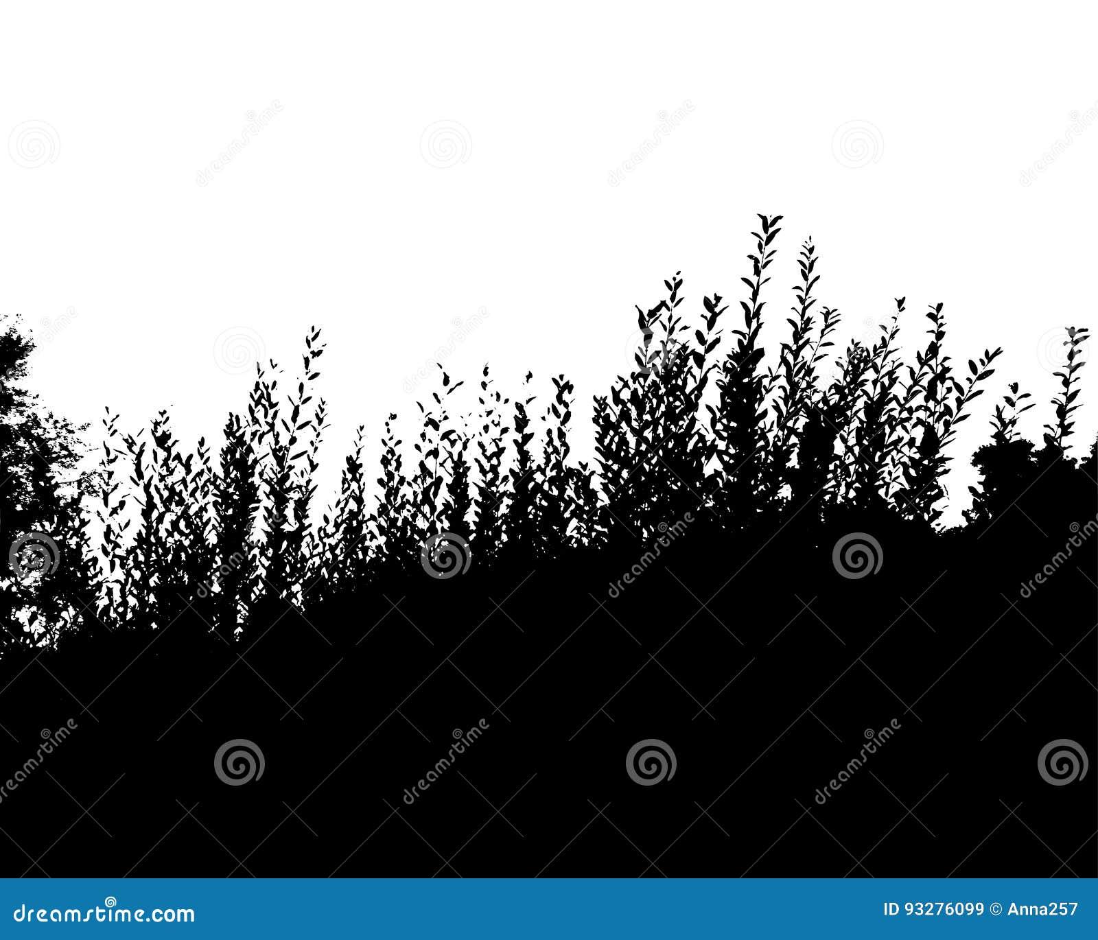 Czarnego lasu sylwetka pojedynczy białe tło