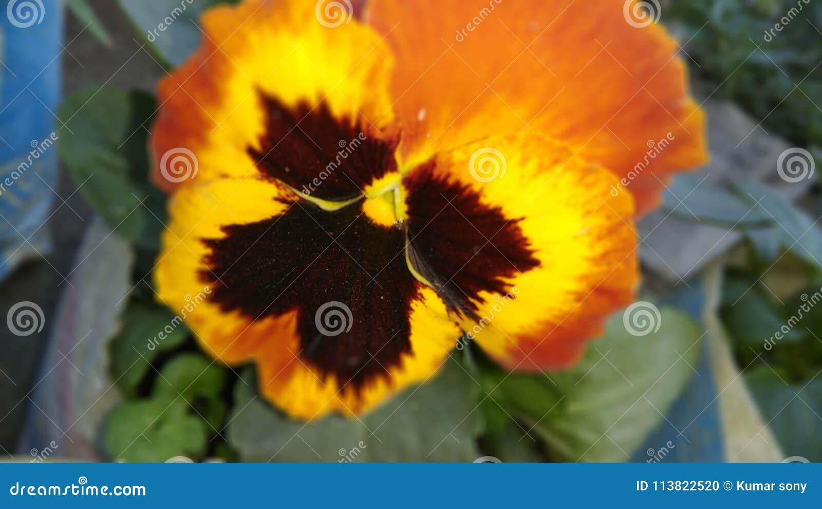 Czarnego zielonego pomarańczowego mieszanka wieloskładnikowego koloru motyli kwiaty