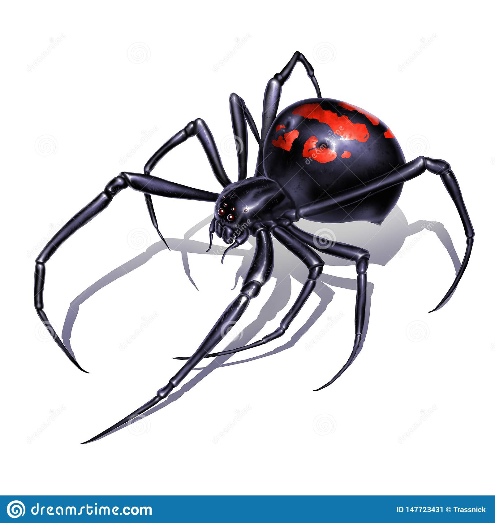 Czarnej wdowy paj?k na bia?ego t?a realistycznej ilustracji odizolowywa Czarnej wdowy paj?ka zab?jca jest niebezpieczny i