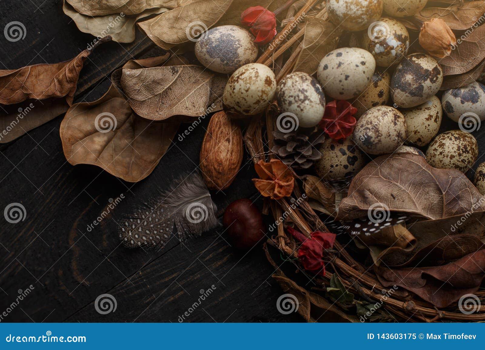 Czarni jajka w gniazdeczku suche gałąź na czarnej desce Wielkanoc styl