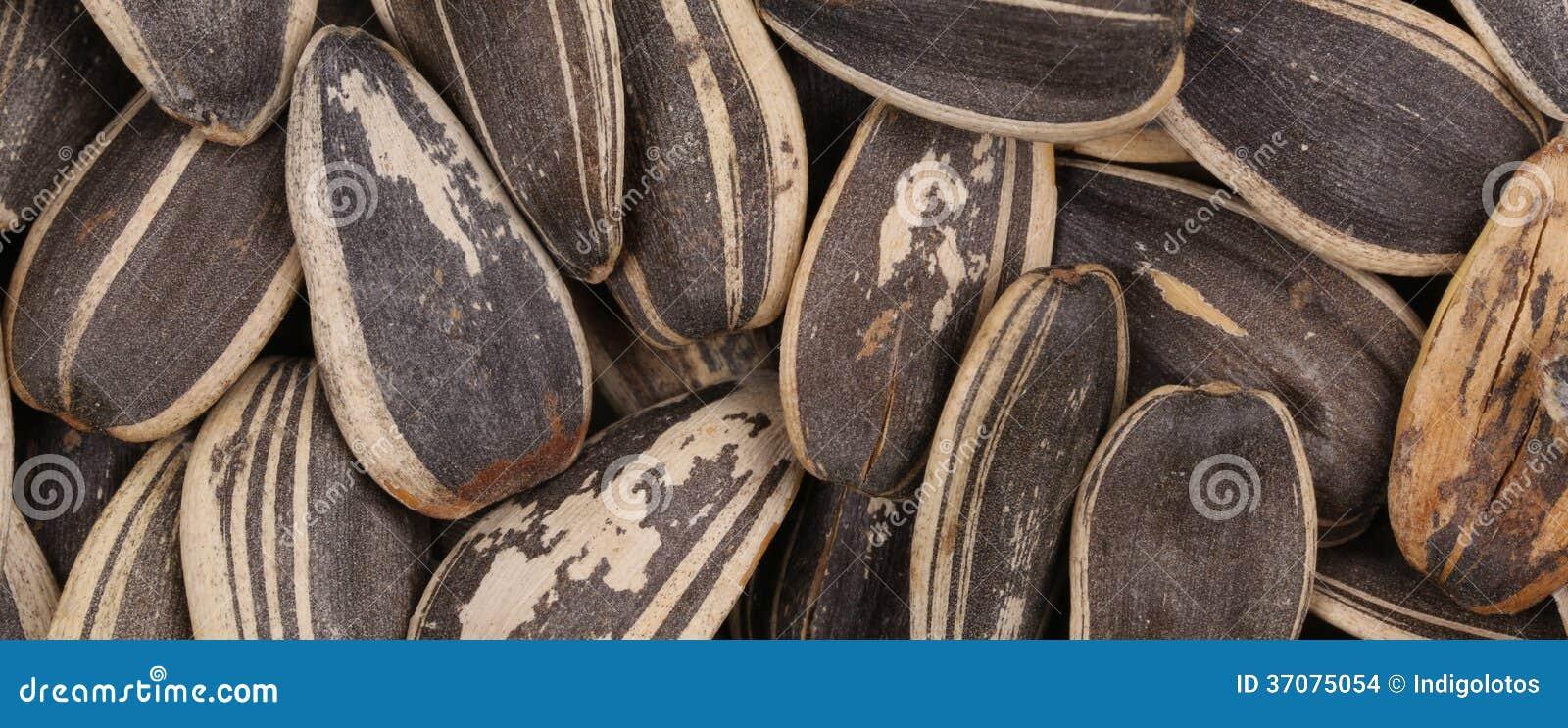 Download Czarni Słonecznikowi Ziarna. Zdjęcie Stock - Obraz złożonej z szczegółowy, wzór: 37075054
