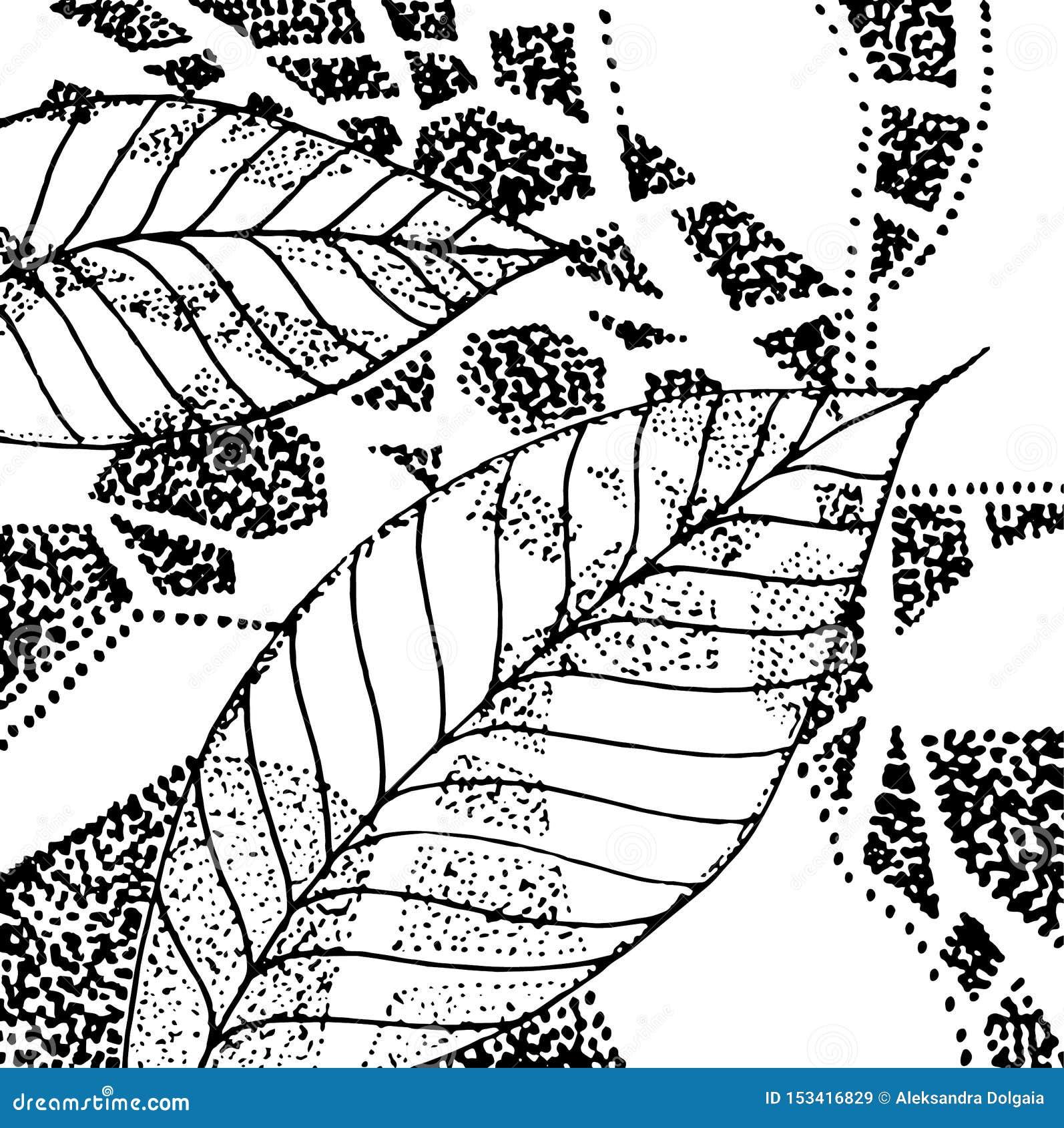 Czarny i biały grafic liście