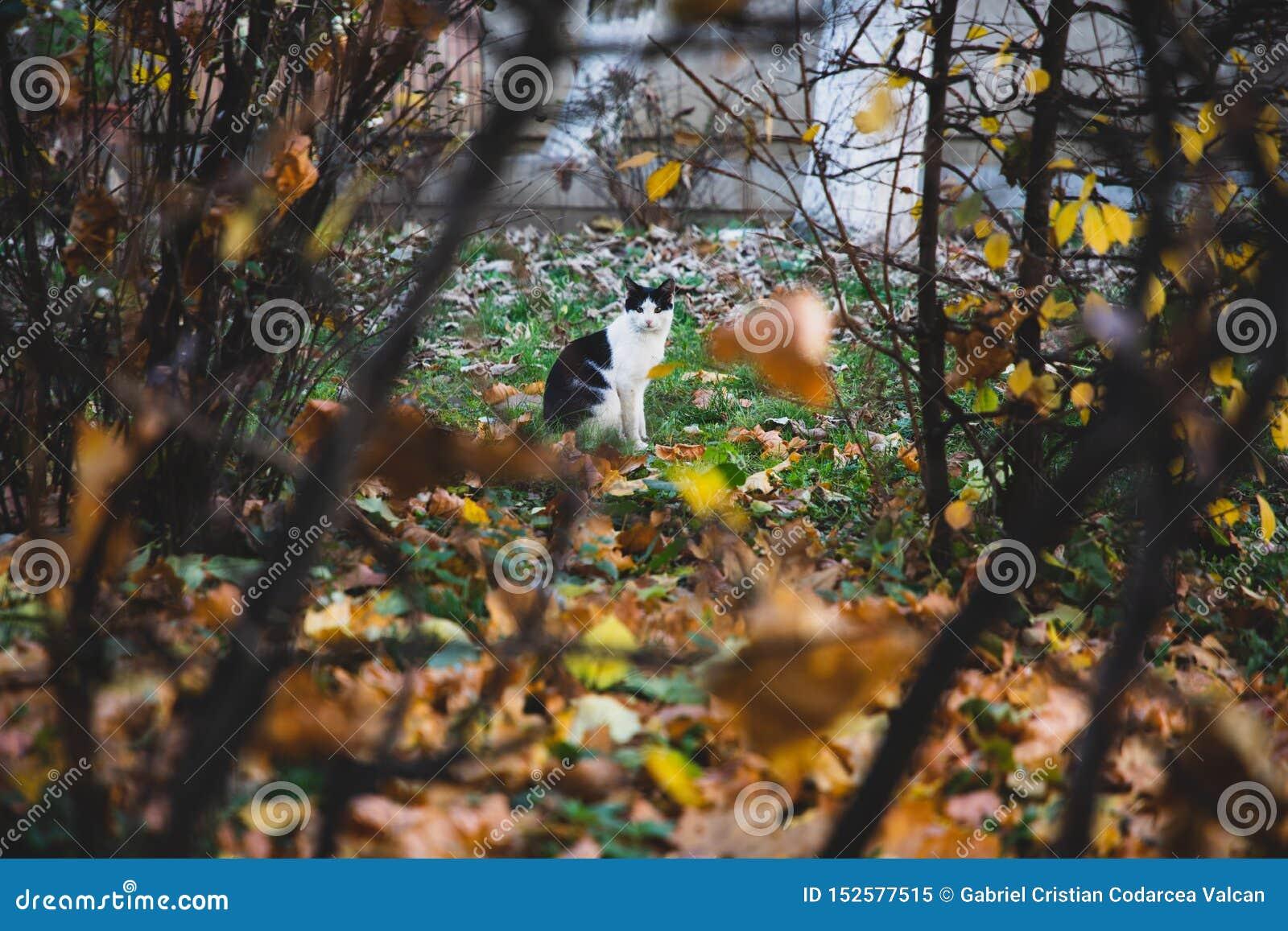 Czarny i biały kot widzieć między roślinnością