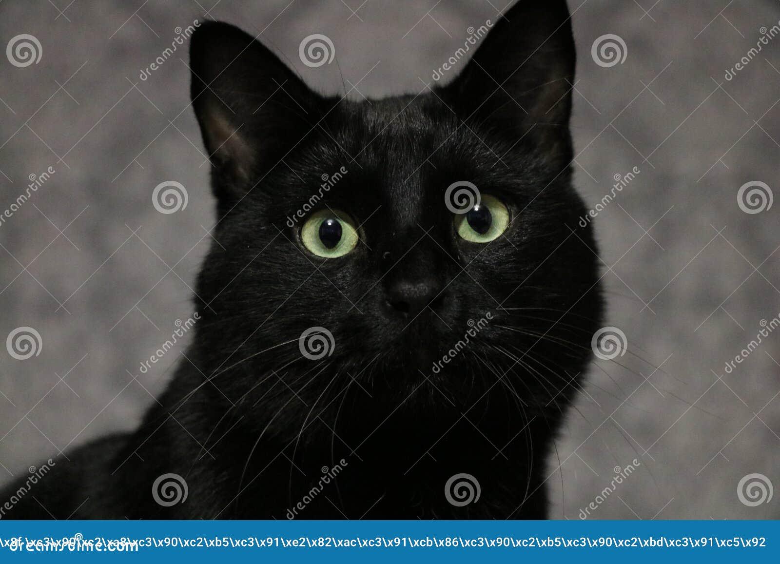 Czarny kot Marsik