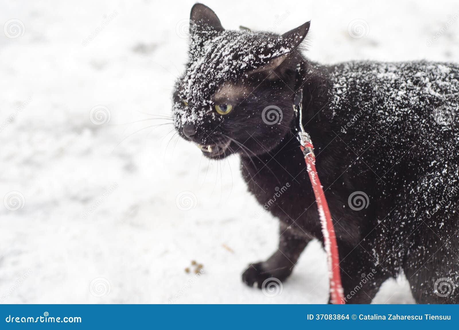 Download Czarny kot w śniegu zdjęcie stock. Obraz złożonej z samiec - 37083864
