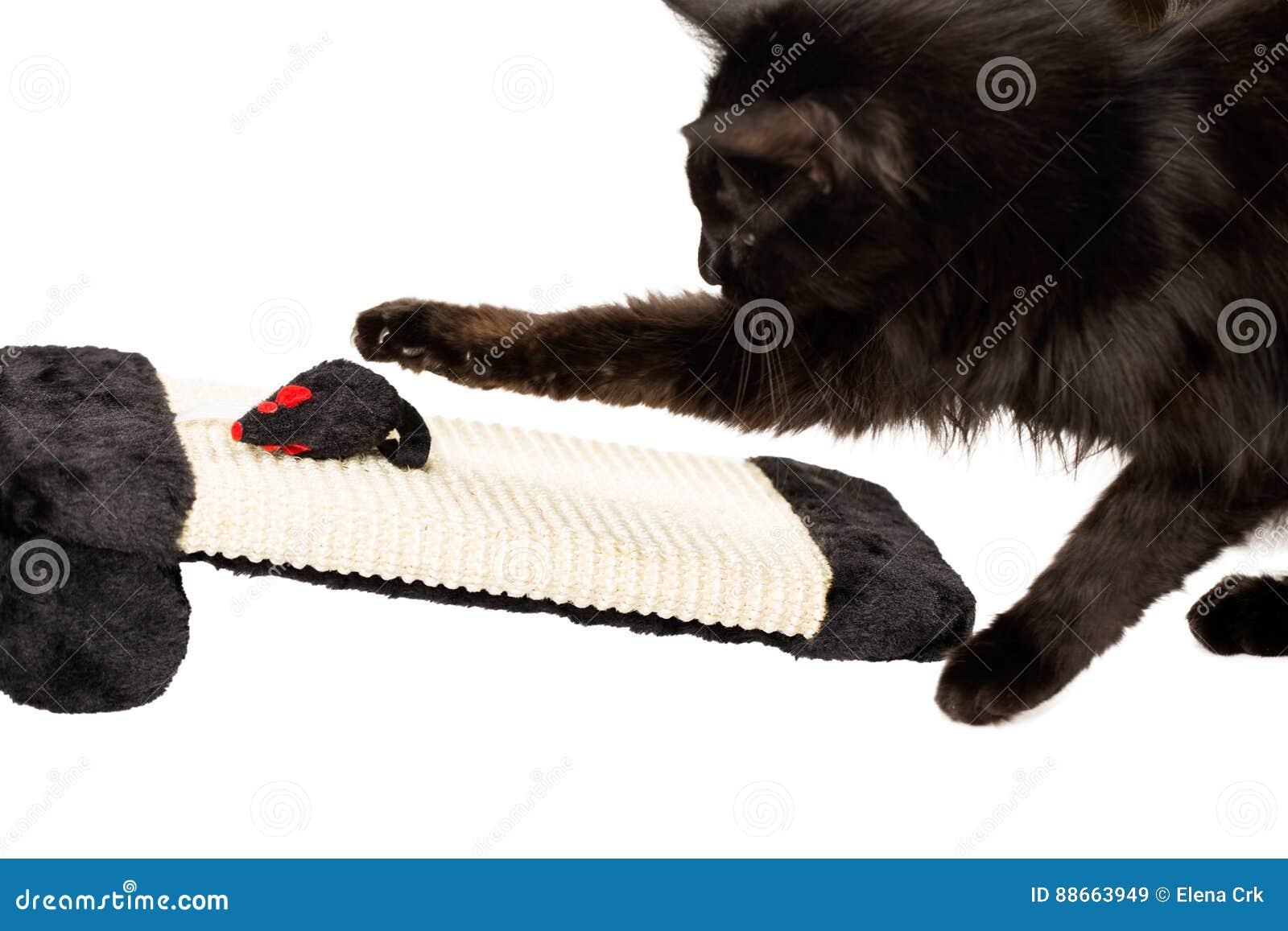 Czarny kota bawić się