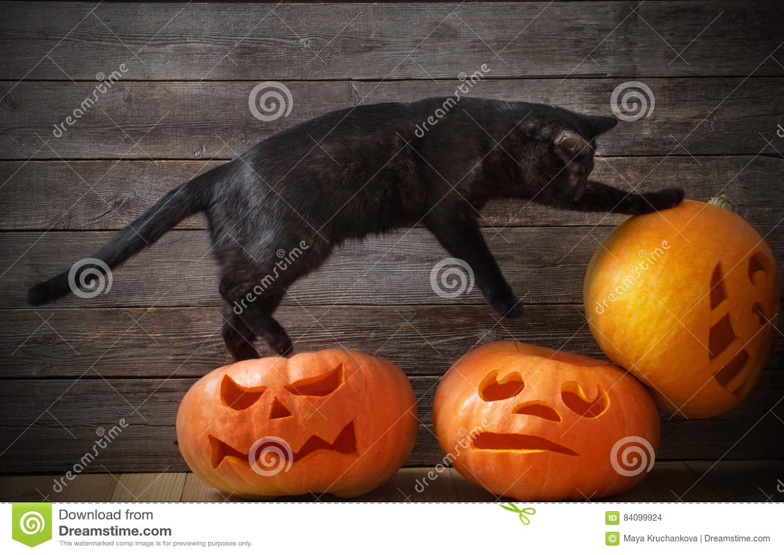 Czarny kota Halloween bania