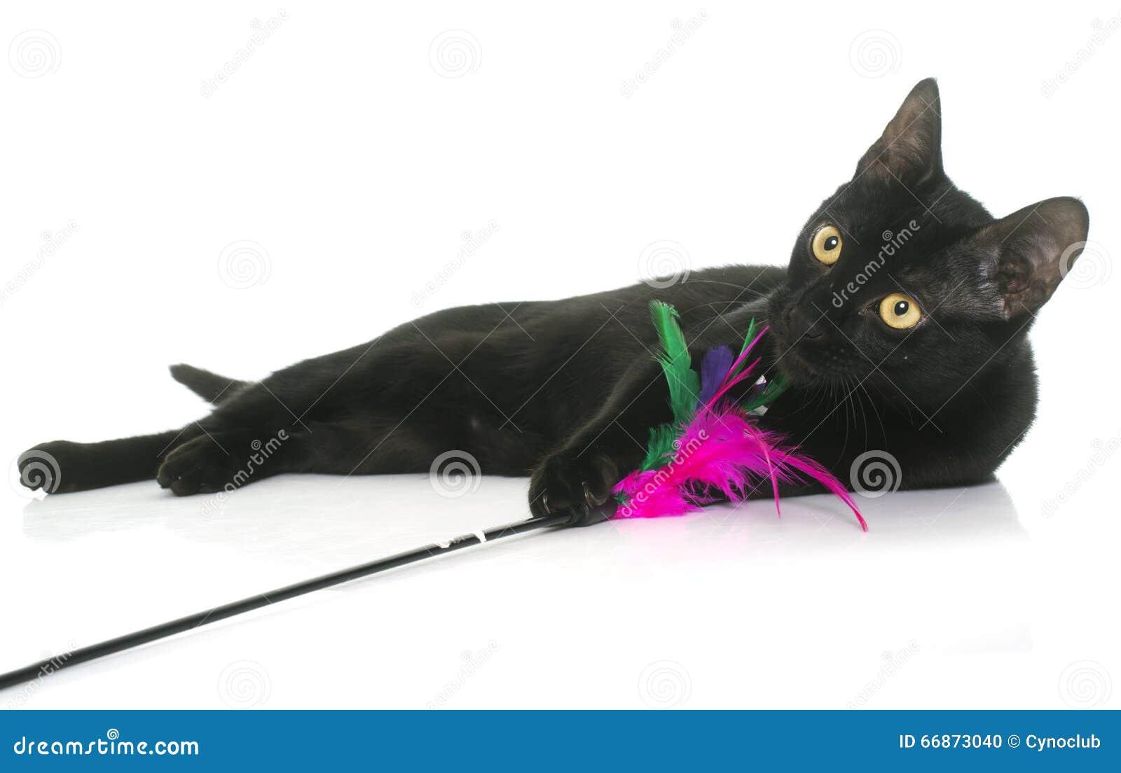 Czarny młody kota bawić się