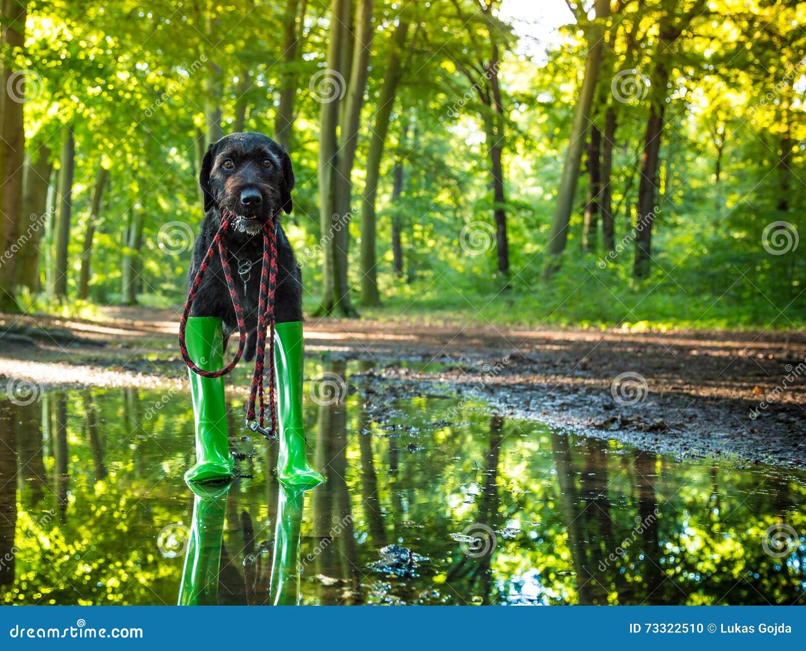 Czarny mutt pies w podeszczowych butach