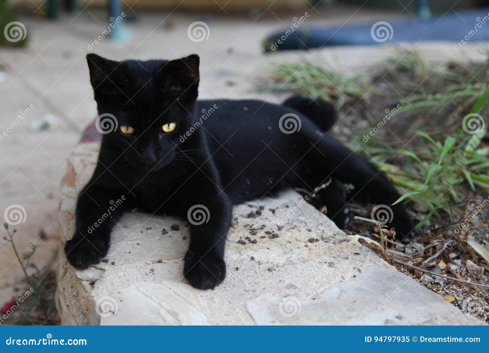 Czarny piękny kot z złotymi oczami