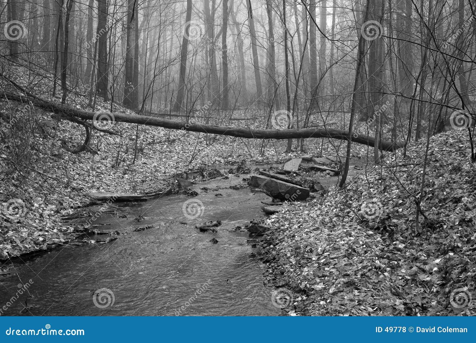 Czarny strumień białego