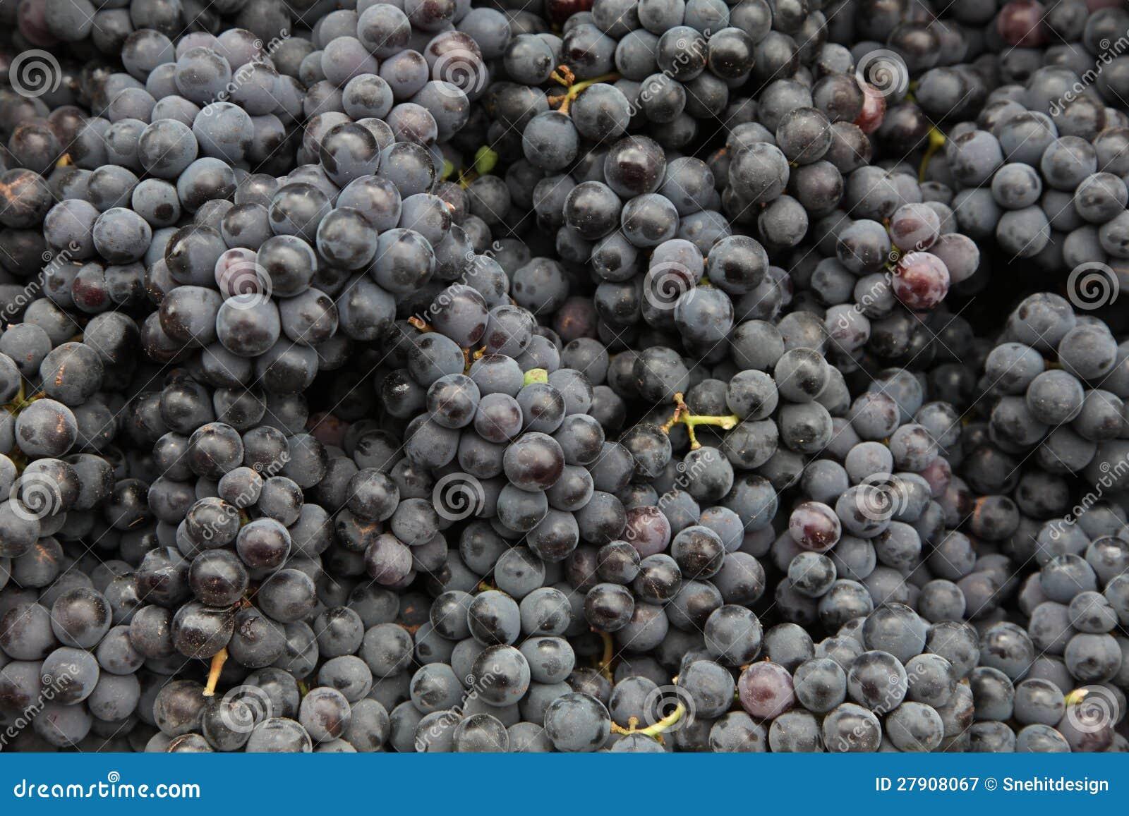 Czarny winogrona