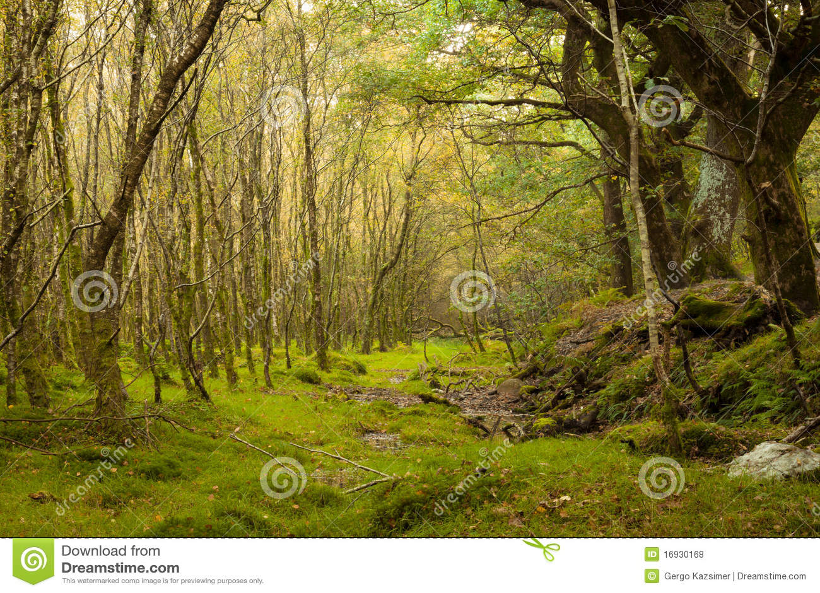 Czarodziejski las