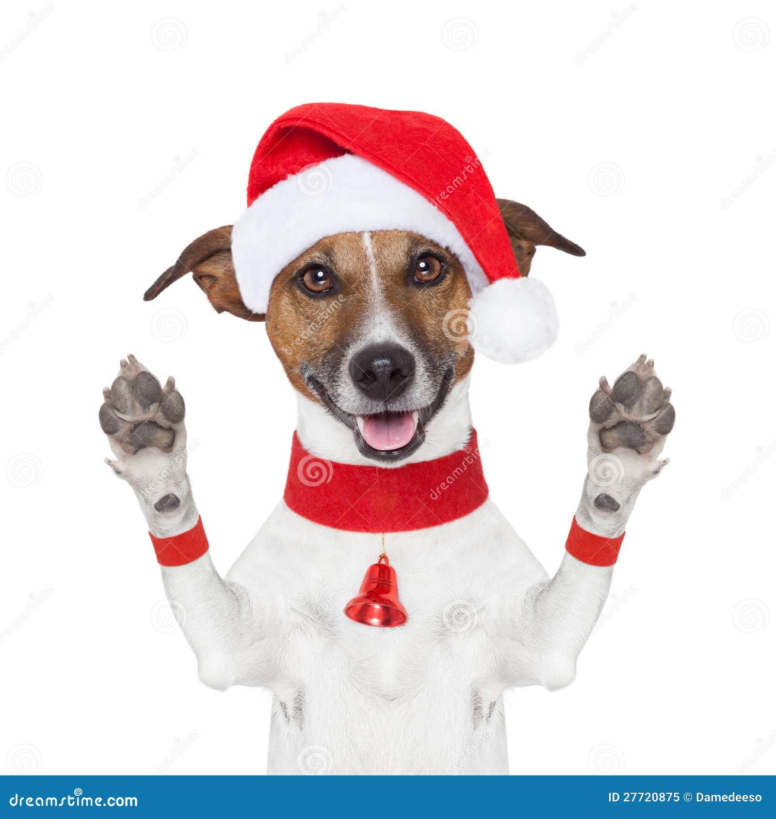 Cześć do widzenia wysoki pięć bożych narodzeń pies z łapami wysoki. - cze%25C5%259B%25C4%2587-do-widzenia-bo%25C5%25BCe-narodzenie-pies-27720875