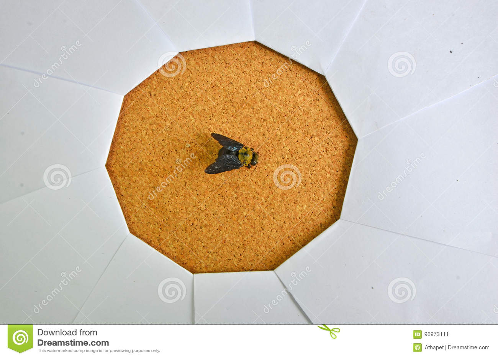 Czerń mamrocze pszczoły w ostrości papierowa żaluzja