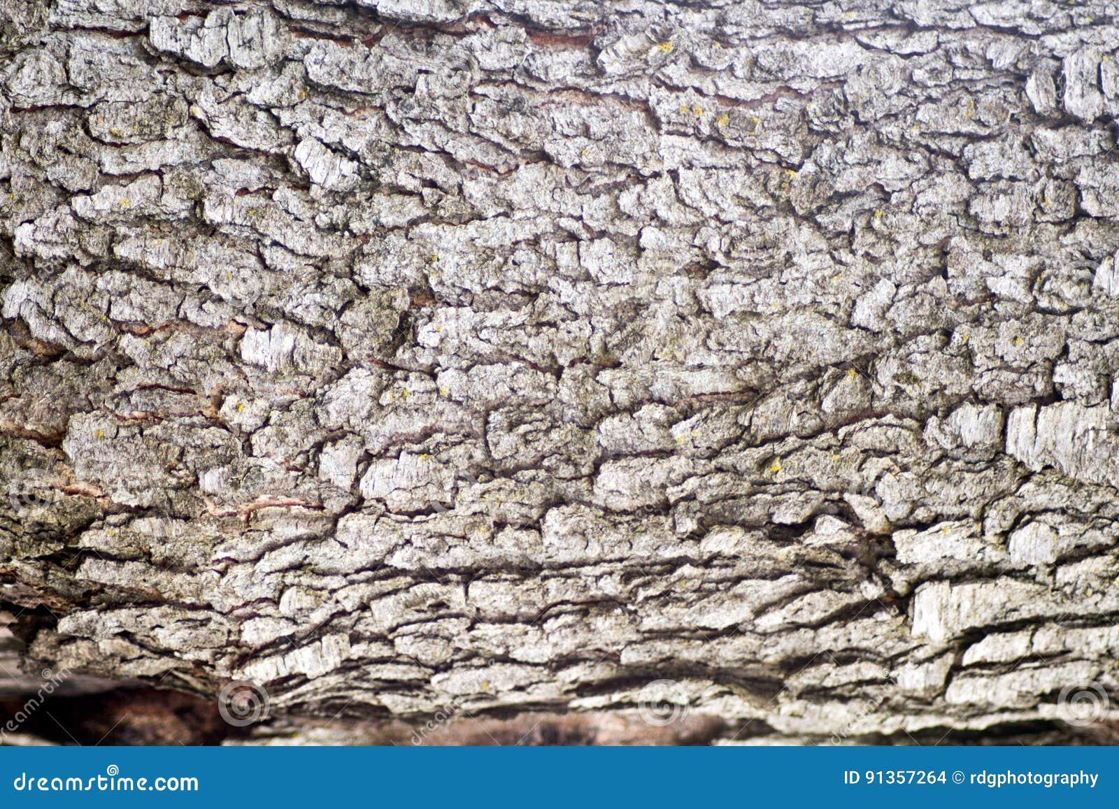 Czereśniowa Drzewna barkentyna