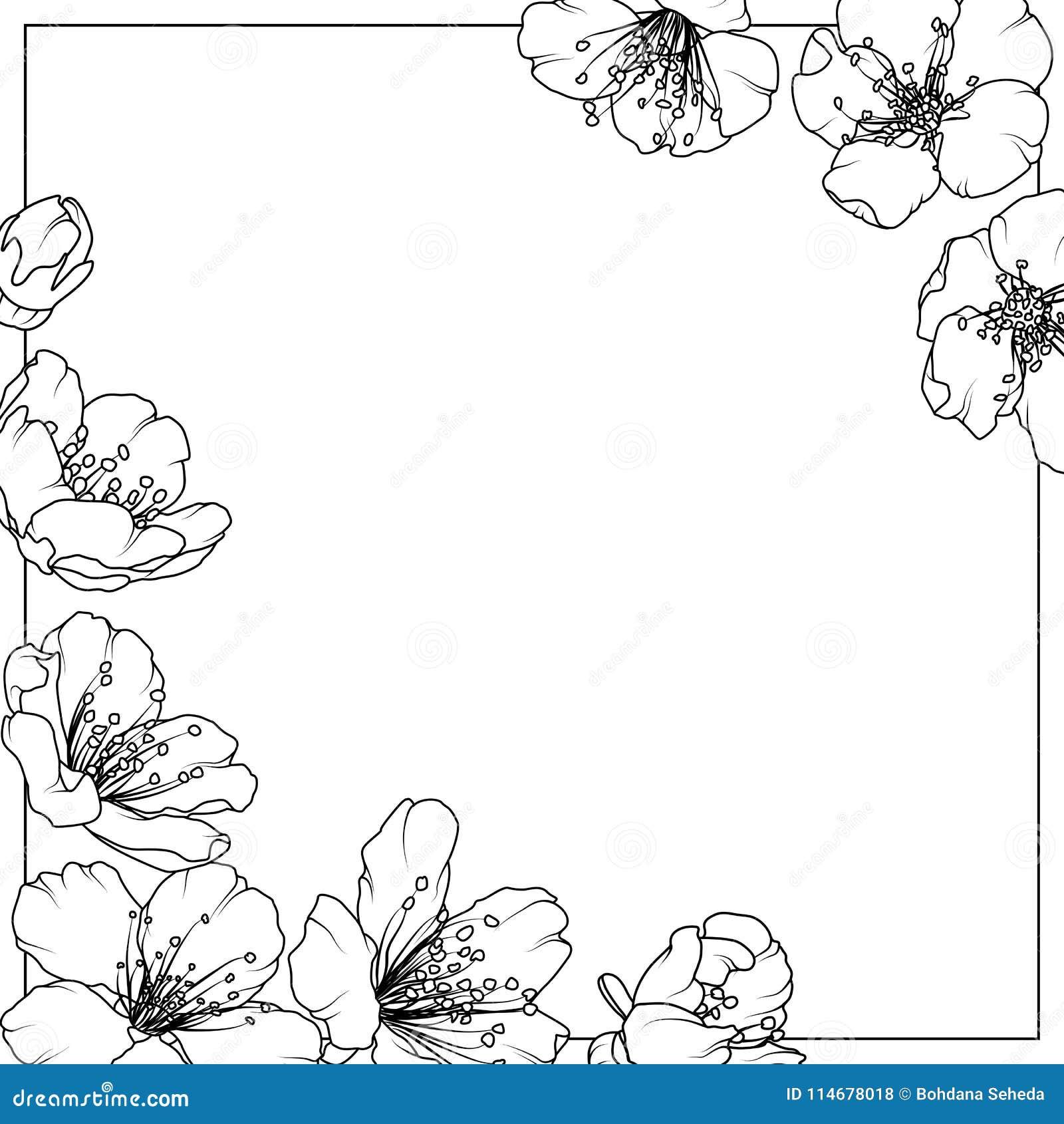 Czereśniowego Sakura aliche wiosny kwiatów drzewna rama