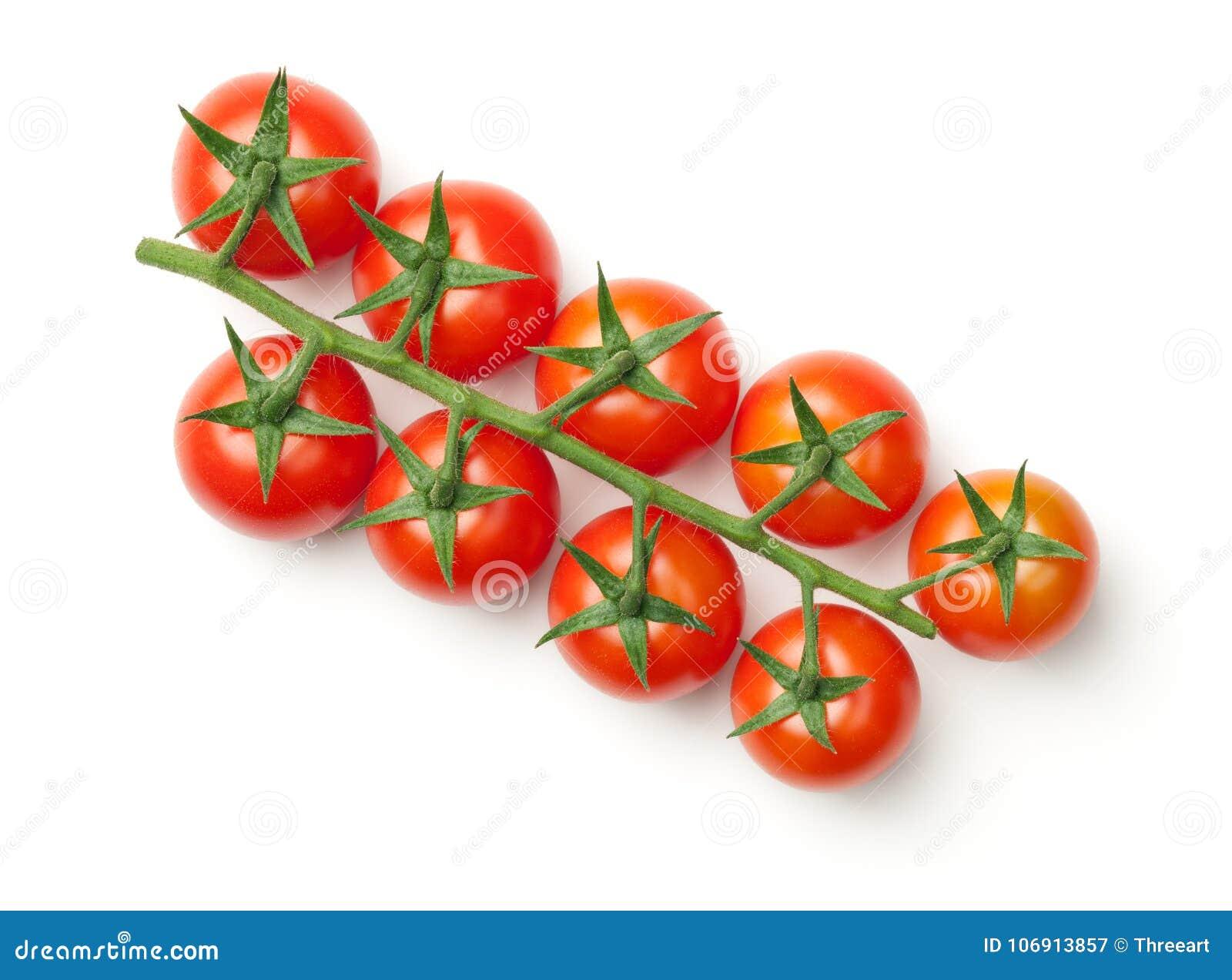 Czereśniowi pomidory na gałąź Odizolowywającej na Białym tle