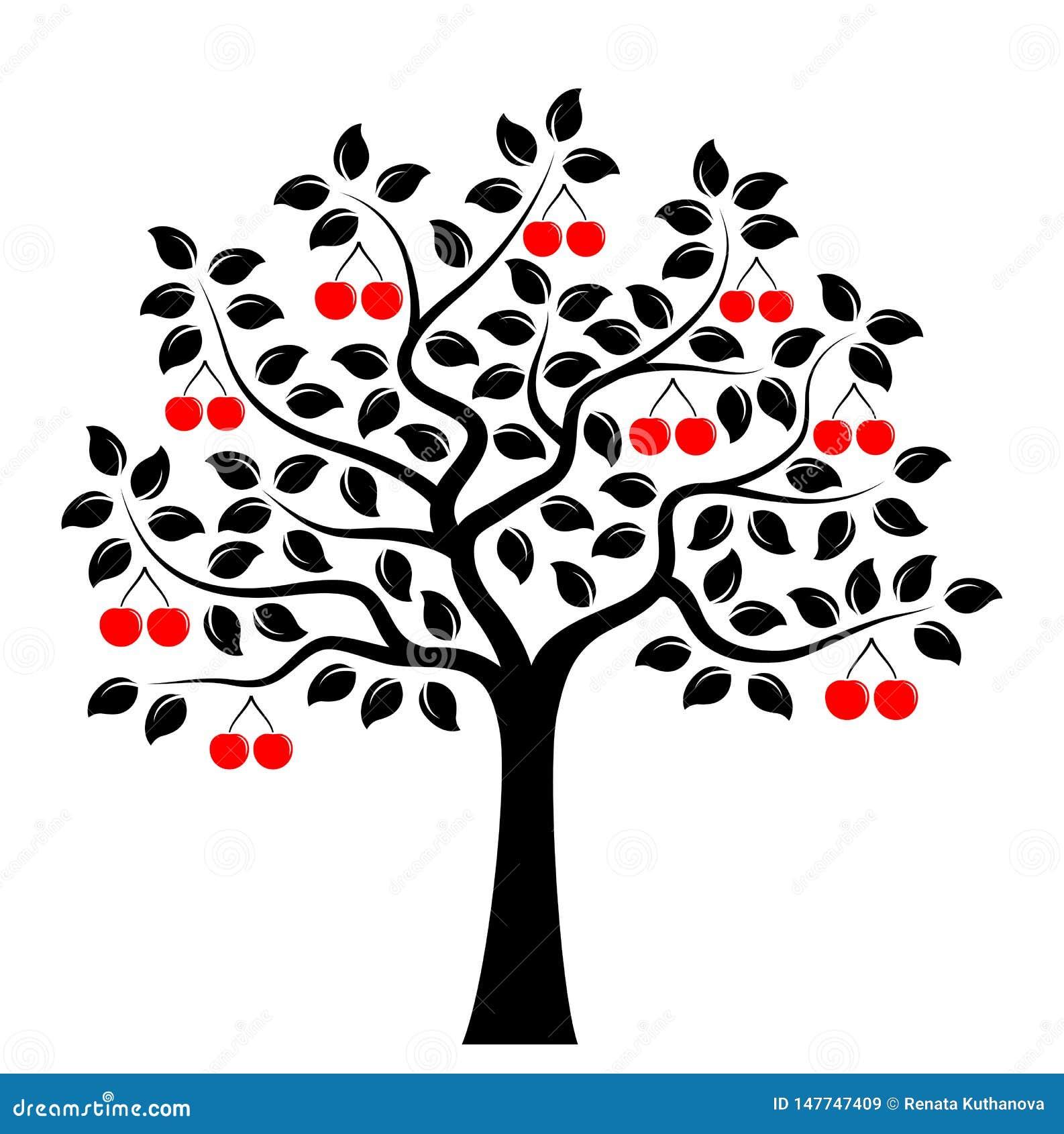 Czere?niowy drzewo