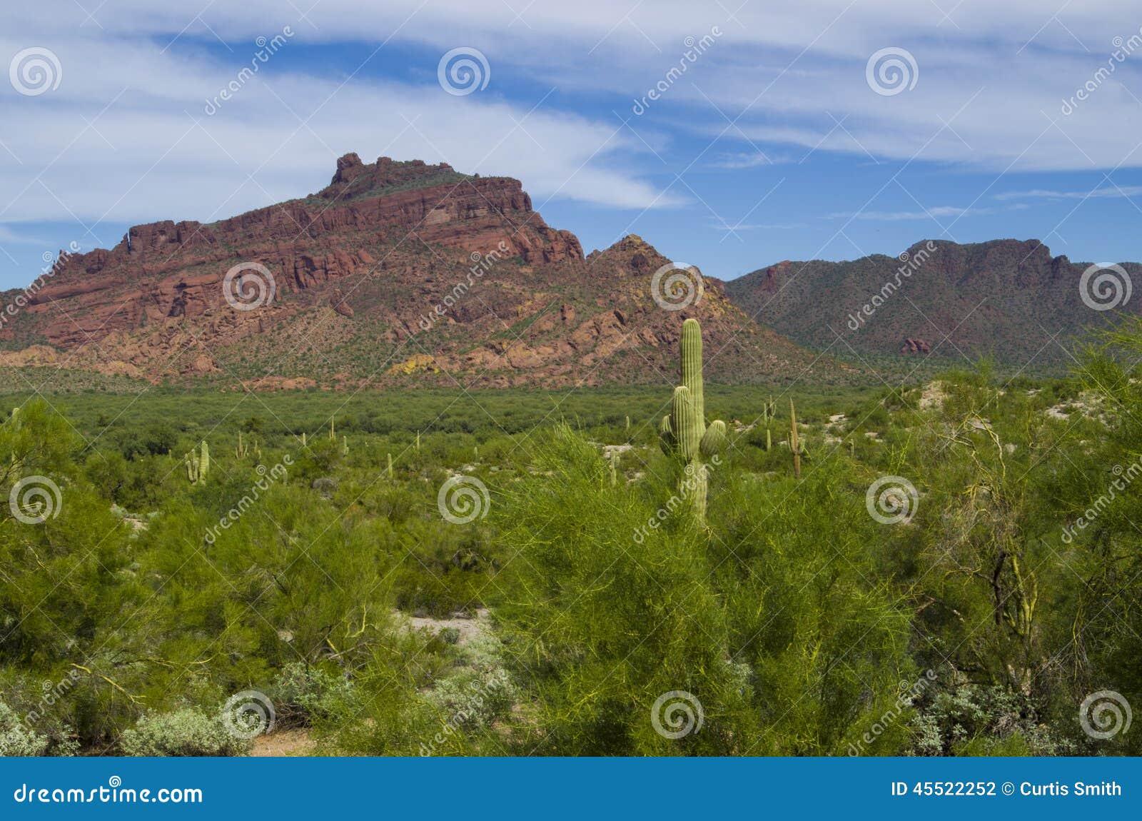 Czerwona góra, zielona rzeczna dolina i saguaro kaktus,