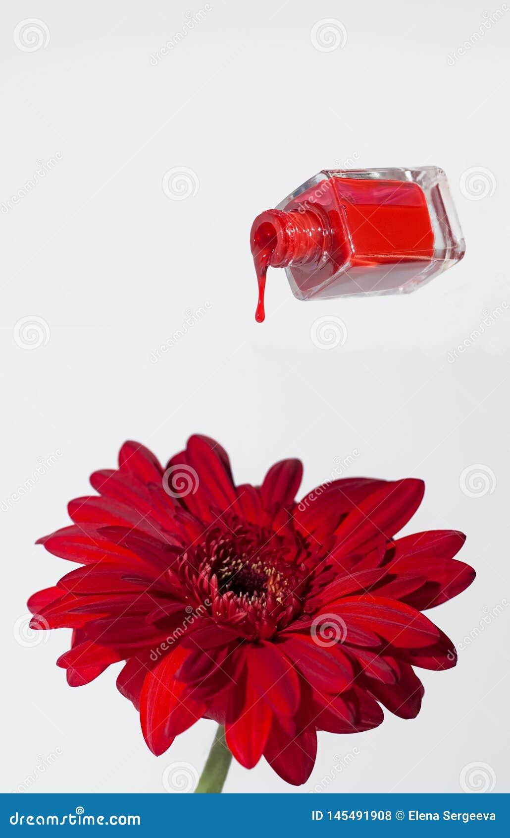 Czerwona kropla lakier na kwiacie