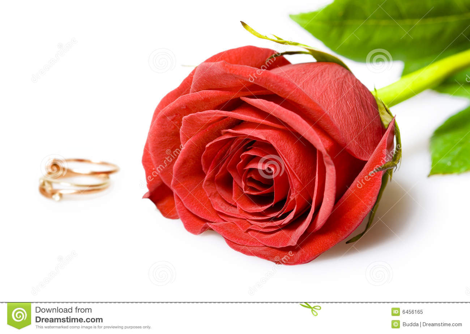 Czerwona róża złote pierścienie ślub